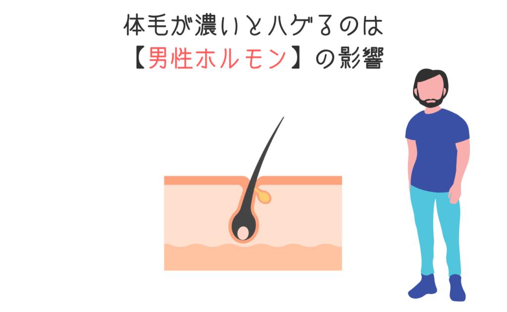 体毛が濃いとハゲるのは【男性ホルモン】の影響