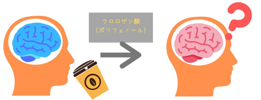 コーヒーの成分クロロゲン酸(ポリフェノール)が薄毛へ与える影響とは?