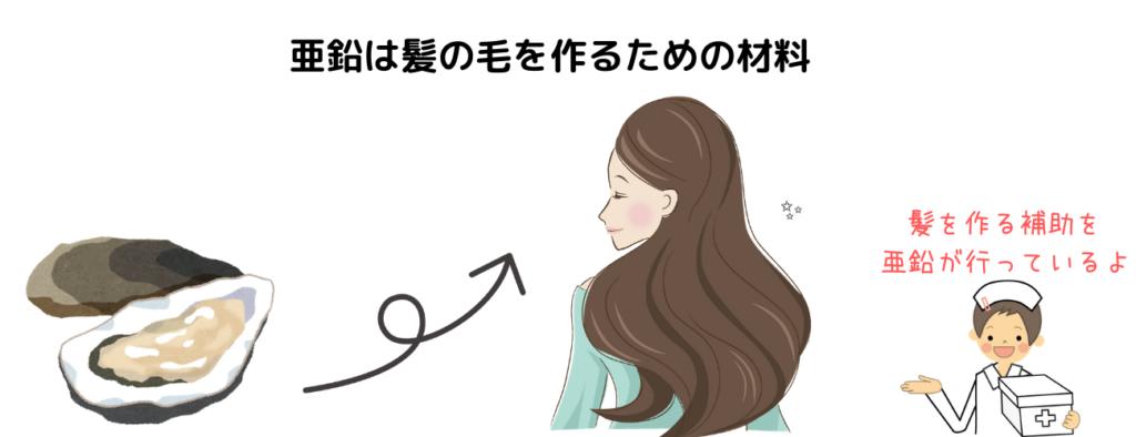亜鉛は髪の毛を作るための材料